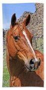 Quarter Horse Portrait Montana Beach Towel