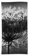 Queen Annes Lace - Bw Beach Towel