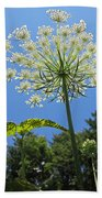 Queen Anne's Lace Beach Towel