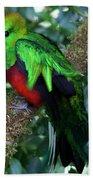 Quetzal Beach Towel