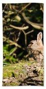 Rabbit In The Woods Beach Towel