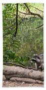 Raccoon At The Lake Beach Towel