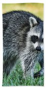 Raccoon Buddy Beach Towel