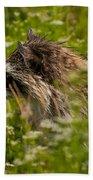 Raccoon In The Meadow Beach Towel