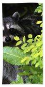 Raccoon Peek-a-boo Beach Towel