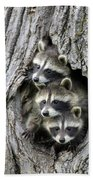 Raccoon Trio At Den Minnesota Beach Towel by Jurgen and Christine Sohns