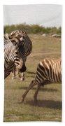 Racing Zebras 1 In Color Beach Towel