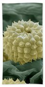 Ragweed Pollen Beach Towel