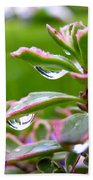 Raindrops On Sedum Beach Towel