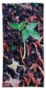 Rain Forest Seedling, Indonesia Beach Towel