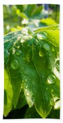 Rain Soaked Leaf Beach Towel
