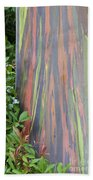 Rainbow Eucalyptus Beach Towel