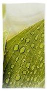Raindrops On Hostas Beach Towel
