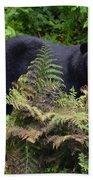 Rainforest Black Bear Beach Towel