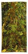 Rainforest Colors Beach Towel