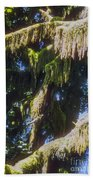 Rainforest Cover Beach Towel