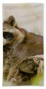 Rakish Raccoon  Beach Towel