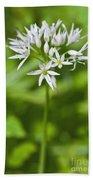 Ramsons Wild Garlic Allium Ursinum Beach Towel