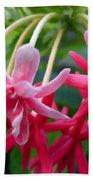 Rangoon Creeper Flower Beach Towel