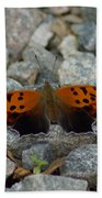 Rarely-sighted Butterfly Species Beach Towel