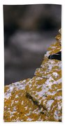 Razorbill Bird Beach Towel