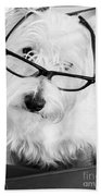Really Portait Of A Westie Wearing Glasses Beach Sheet