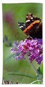Red Admiral Butterfly On Butterfly Bush Beach Towel