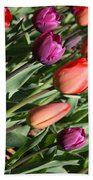 Red And Purple Tulips Beach Towel