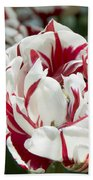 Red And White 6393 Beach Towel