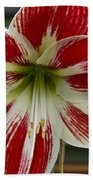 Red And White Beach Towel