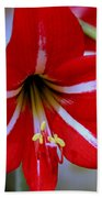 Red And White Lilly Beach Towel by Debra Forand