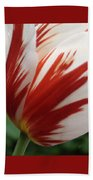 Red And White Tulip  Beach Towel