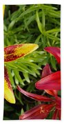 Red And Yellow Lilly Flowers In The Garden Beach Towel