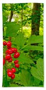 Red Baneberry Along Rivier Du Nord Trail In The Laurentians-qc Beach Towel
