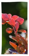 Red Barberry Beach Towel