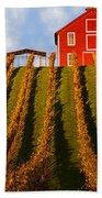 Red Barn In Autumn Vineyards Beach Towel