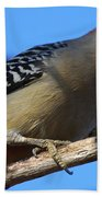 Red-bellied Woodpecker Catching Grub Beach Towel