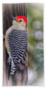 Red-bellied Woodpecker Beach Towel