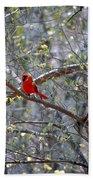 Red Bird In Dogwood Beach Towel