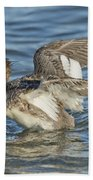 Red-breasted Merganser Beach Towel