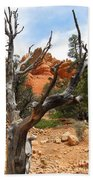 Red Canyon Tree And Rocks Beach Towel