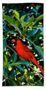 Red Cardinal 1 Beach Towel