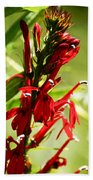 Red Cardinal Flower Beach Towel