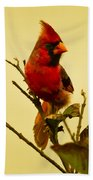 Red Cardinal No. 2 - Kauai - Hawaii Beach Towel