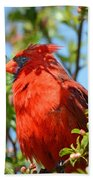 Red Cardinal Pink Blooms Beach Towel