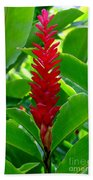 Red Cone Ginger Beach Towel