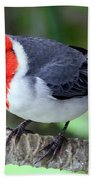 Red Crested Cardinal Beach Towel