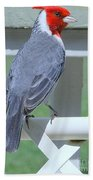 Red Crested Cardinal No 2 Beach Towel
