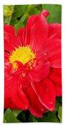Red Dahlia Flower Beach Towel