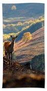 Red Deer Calf Beach Towel